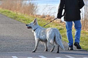 No llevar suelto el perro. ¿O es mejor llevar atado al perro?